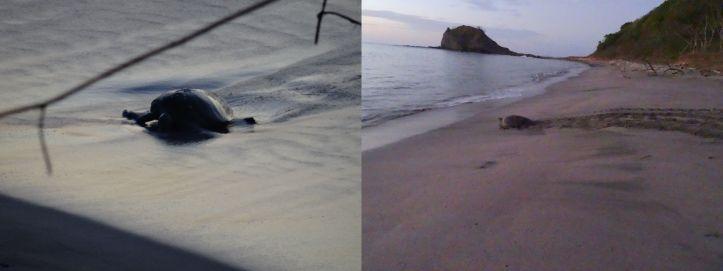 11 - Playa Grande 10.1