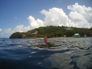 Iles grenadines Moustique