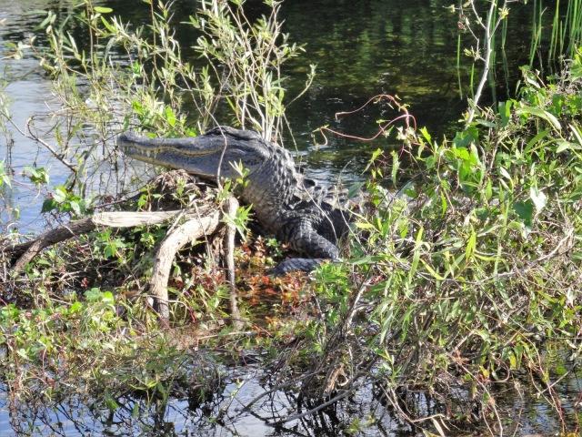 Floride les everglades By Gael Besseau